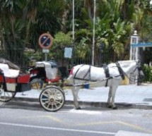 Horse and Carriage Petition
